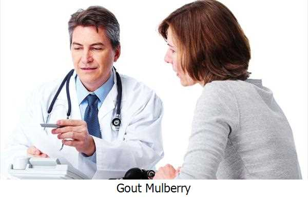 Gout Mulberry